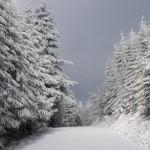 sneeuwopbomen
